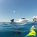 Exmouth, whale shark excursion